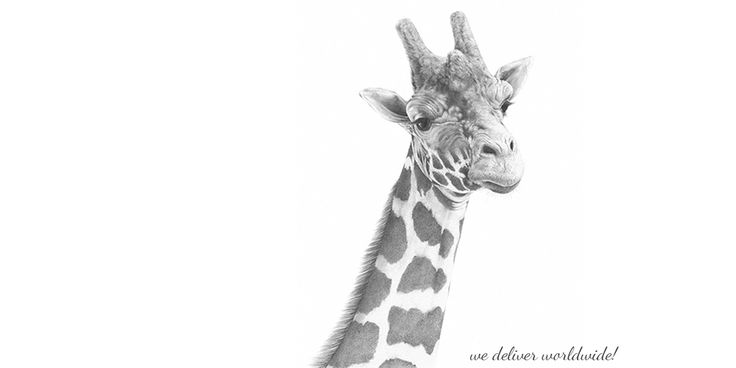 Farrow the Giraffe, by Andrew Howells