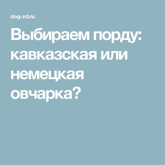 Выбираем порду: кавказская или немецкая овчарка?