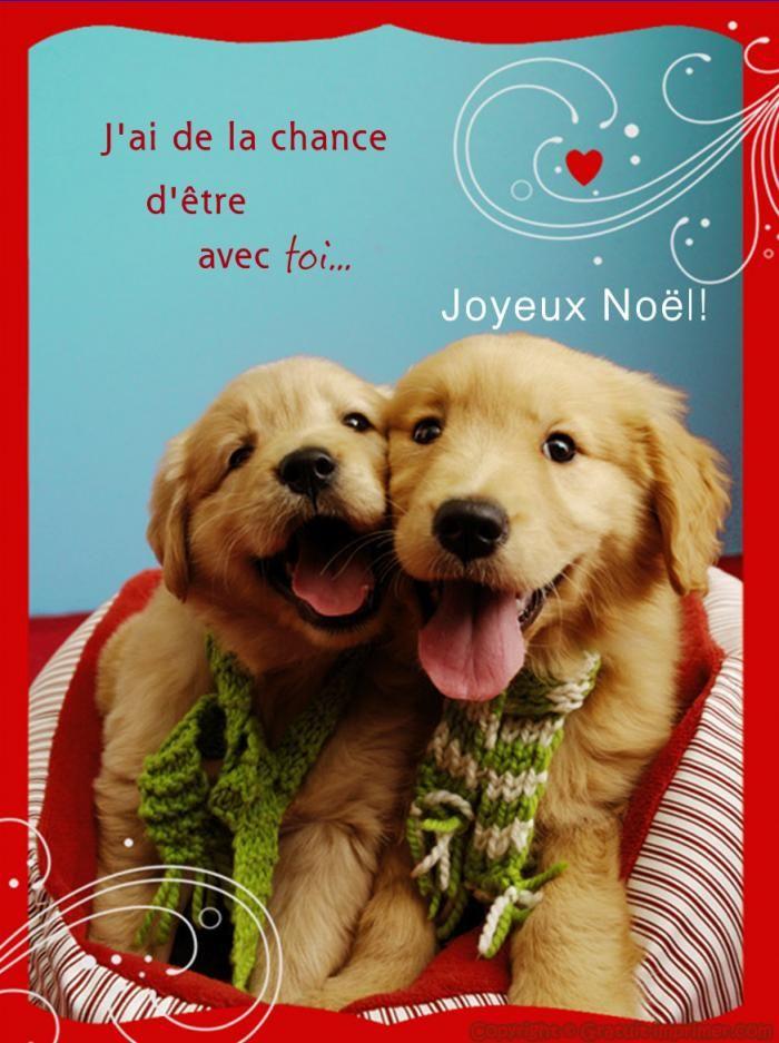 Carte postale a imprimer gratuitement animaux - Photo d animaux a imprimer gratuitement ...