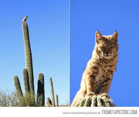 Lord of the Cacti looks down on your from his spiny tower…