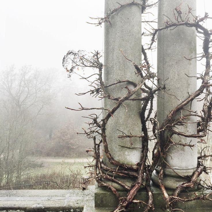 Hampstead Heath pergola
