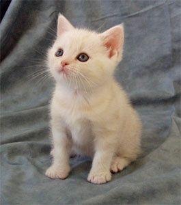 Adopt a cat!!