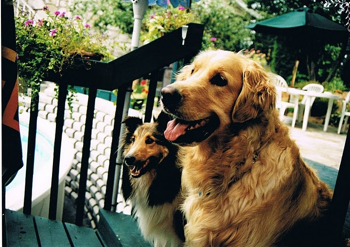 Sam and Duncan. Friends in life, now friends in heaven. <3<3<3