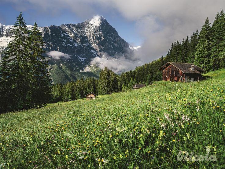 #Switzerland #Field #Alps #Ricola