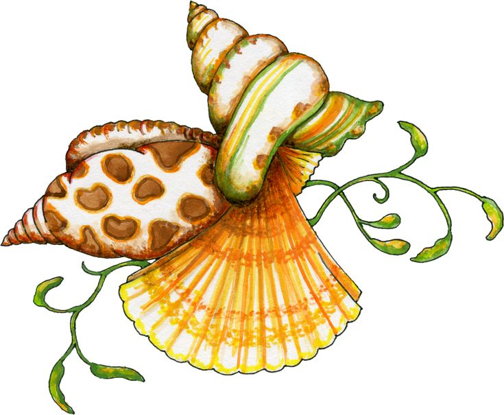 Ocean free clip art  | Free Sea Shells Graphic - Transparent PNG files and Paint Shop Pro ...