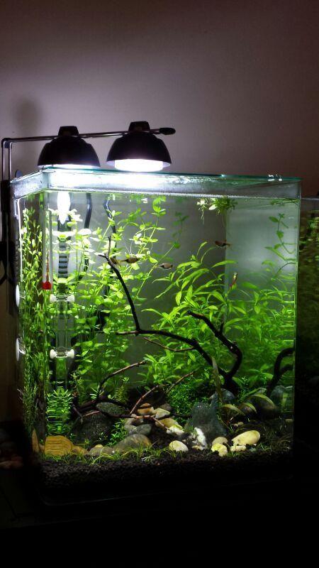 Eheim aquastyle 9 hydra forum the for Plante nano aquarium
