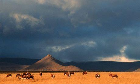 Blesbok Herd on the open Karoo landscape