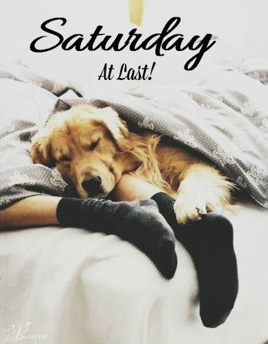 179 best images about Saturday on Pinterest Saturday Dog