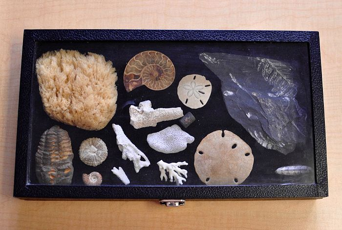 montessori blogs: Villa di Maria Montessori School Blog - fossil tray