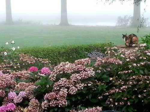 uitgebloeide hortensia's in het najaar - harrie boerhof hoveniersbedrijf tuincentrum