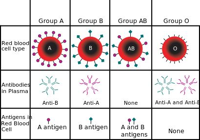 There are four different blood types that exist in the human race today. These blood types include type A, AB, O and B. AB positive blood is rare but special as it is a universal recipient of all blood types. This means that during emergency situations such as a need of a blood transfusion, a person with an AB positive blood type receives blood from a donor with type O, A, B or AB without any problems or complications. ( Diana is AB+ )