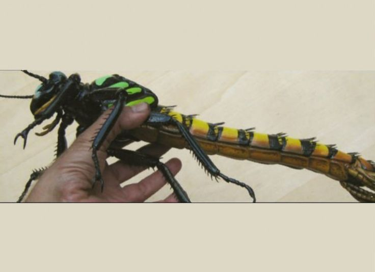 15 NOPE Creatures We're All Glad Are Extinct - brainjet ...