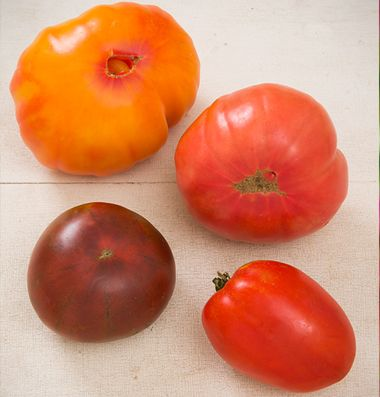 1000 images about tomatoes on pinterest gardens hanging baskets