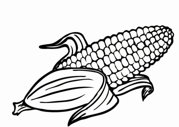 Corn On The Cob Coloring Page Fresh Corn Drawing At Getdrawings