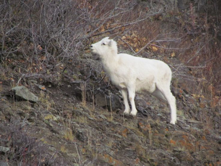 Alaska's Kenai Peninsula Wildlife Viewing * www.deniselakelodge.com/fishing-news/alaskas-kenai-peninsula-wildlife-viewing