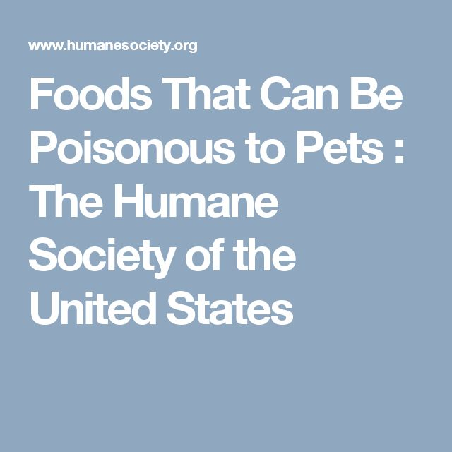 Foods That Can Be Poisonous to Pets : The Humane Society of the United States