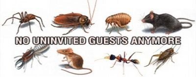 Orange Coast Pest Control is the #1 pest control company in Corona, CA. We are industry experts at keeping your home and business bug free and have been consistently rated as the favorite pest control company in Corona for over a decade.