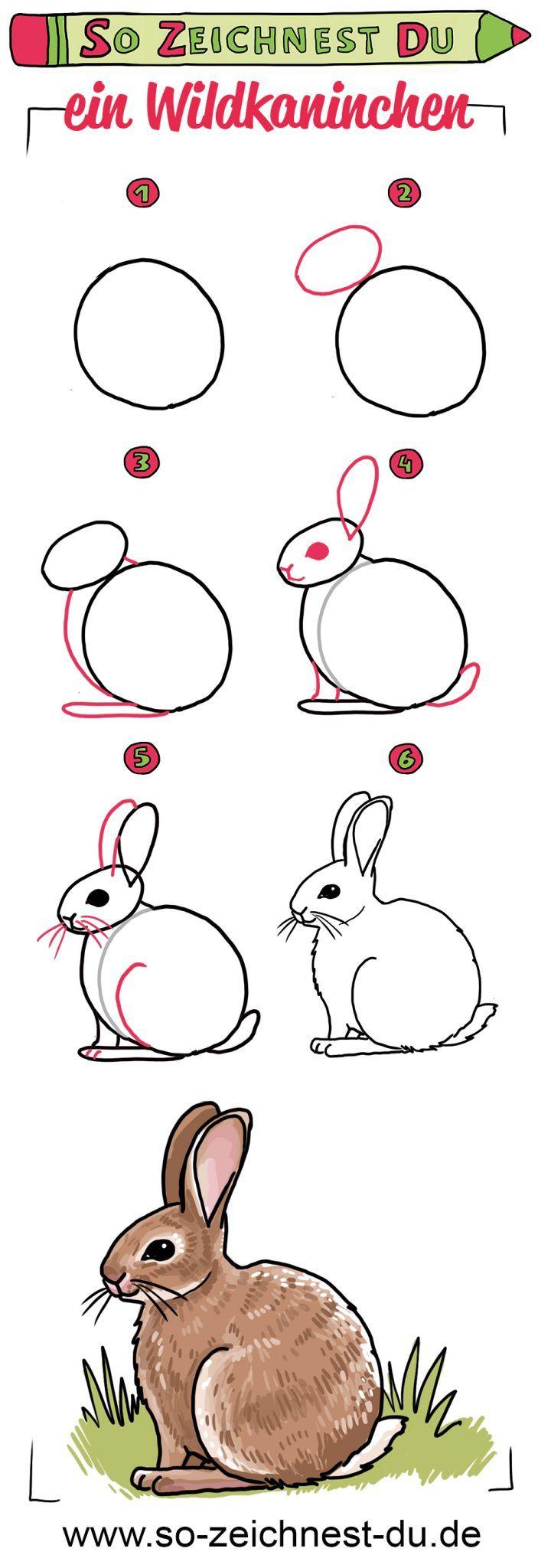 So zeichnest du ein Wildkaninchen. Mit unserer Zeichenschule lernst du, ganz einfach Tiere wie dieses Kaninchen zu zeichnen. Und: Auf unserer Website findest du übrigens eine noch detailliertere Schritt-für-Schritt-Anleitung! #sozeichnestdu #zeichnenlernen #zeichenschule