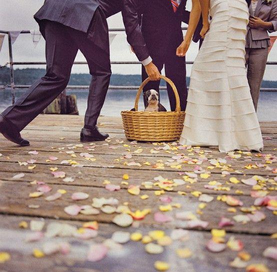 Animals and pets at weddings | London Bride Blog | London Wedding Planning + Inspiration