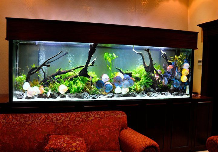 I love this huge fish tank!!!