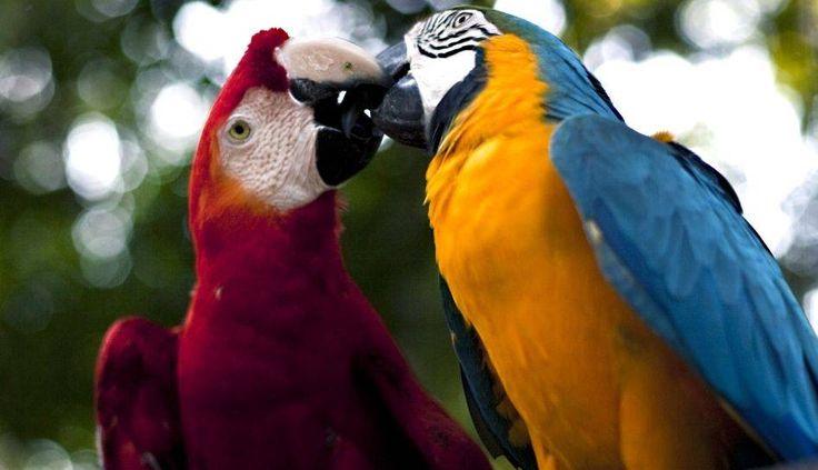 El Río Amazonas/Bosque Tropical recibirá la distinción por parte de la Fundación New 7 Wonders en una ceremonia a realizarse en Iquitos. Estas son algunas muestras de la riqueza natural de este rincón del planeta . Foto 1 de 10