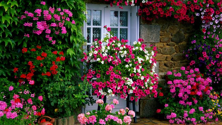 Farm House Garden Wallpaper Flowers Foliage