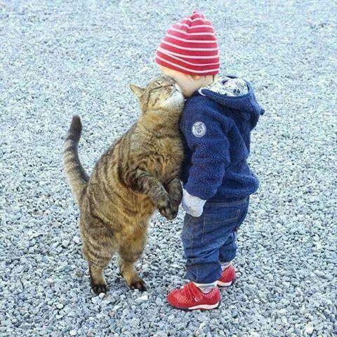Kiddy Cat Lovin