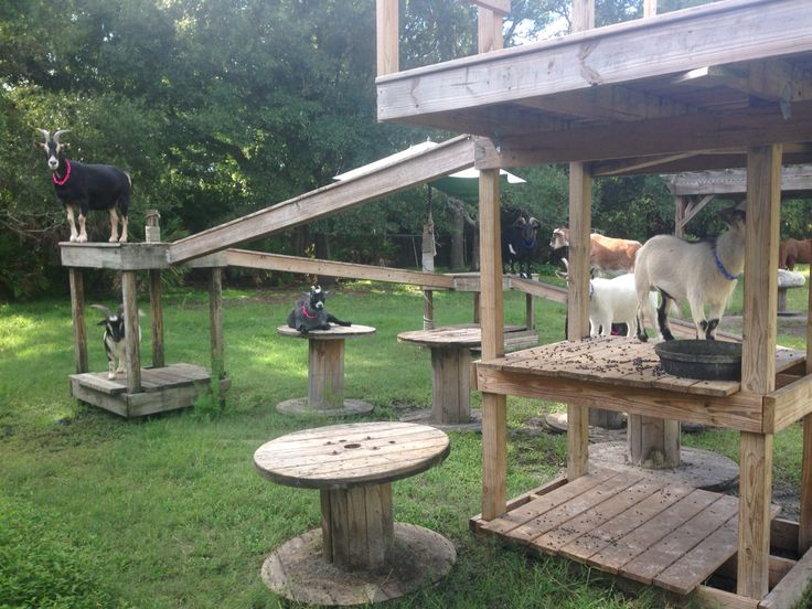 Goat Playground So Much Fun For Them Goat Farming Goat