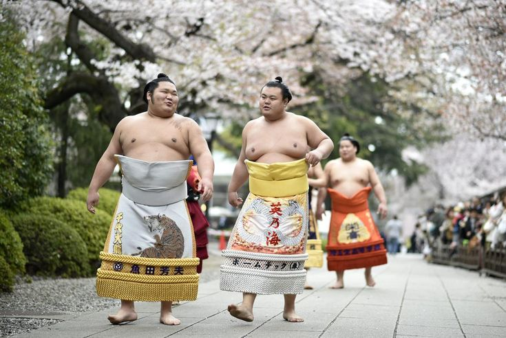 Sumo wrestlers walk under cherry blossoms in full bloom on their way to the 'Honozumo', a ceremonial sumo tournament at the Yasukuni Shrine precincts in Tokyo, Japan, April 3. (Franck Robichon/EPA)