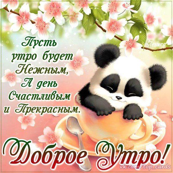Мимозы, открытка любимому доброго дня