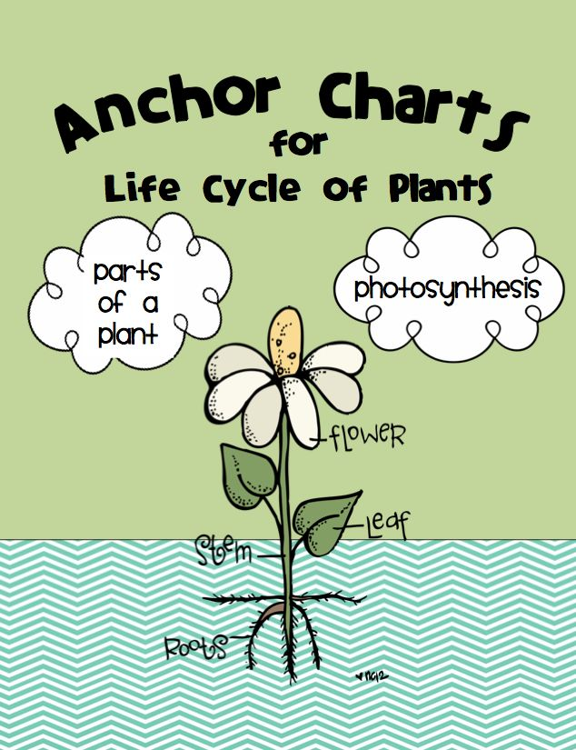 "The Best of Teachers Pay Teachers: FREE SCIENCE LESSON - ""Plant Life Cycle Anchor Charts""Free Science, Classroom, Cycling Anchors, Anchor Charts, Charts Freebies, Plant Life Cycles, Plants Life Cycling, Anchors Charts, 2Nd Grade"