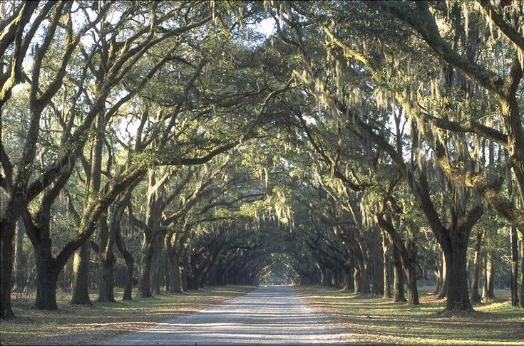 Savannah, GA: This is Wormsloe State Historic Site's Majestic Live Oaks