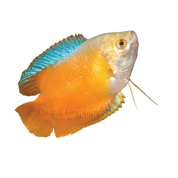38 best katie 39 s veterinary birthday party 12 19 2015 1 for Online fish stores