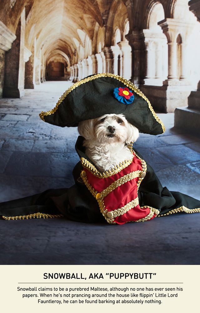 An Adorable Series of Photos of Small Dogs With A Napoleon Complex