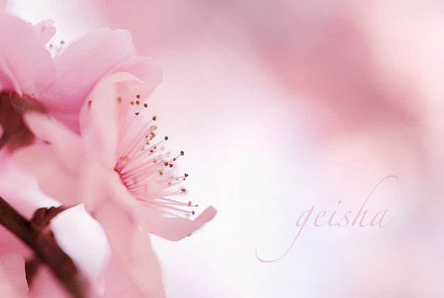 beautiful photography by ~geisha~