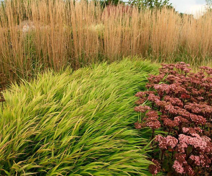 546 best planting design plant combinations images on for Planting plans with grasses