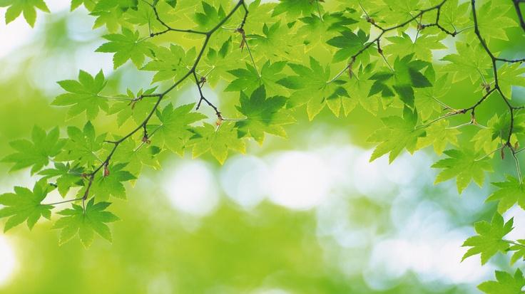 Legno; rami, foglie verdi.