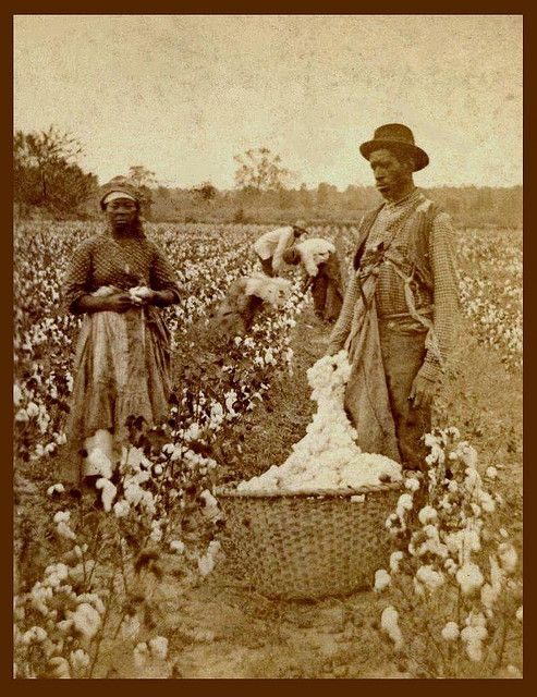 Okinawa Soba ...... SLAVES, EX-SLAVES, and CHILDREN OF SLAVES IN THE AMERICAN SOUTH, 1860 -1900 (12) In a Cotton Field of South Carolina.