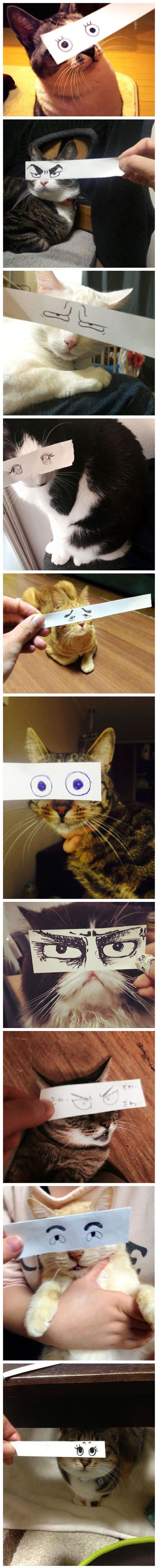 "12 Funny Pictures Of Cats With ""Paper"" Eyes"