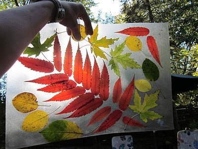 Leave display or placemat with contact paper and collected leaves