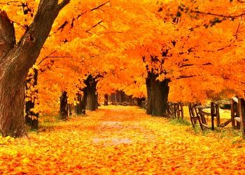 Fall Leaves Pathway Computer Wallpaper Fall Wallpaper For Computer Screen Free Photo Wallpapers