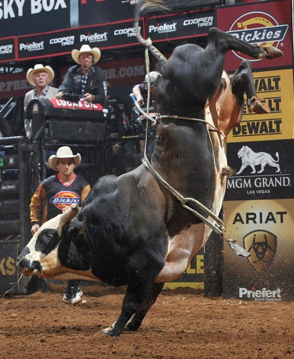 Rango (2007) 1500 lb American Bucking Bull.Rangos gonna have back problems when he gets older!!!