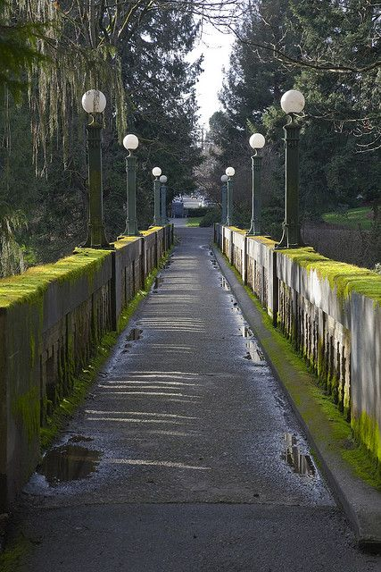 Seattle Arboretum - The Wilcox Footbridge 1911. Amazes me that this beautiful place is just a few minutes away.