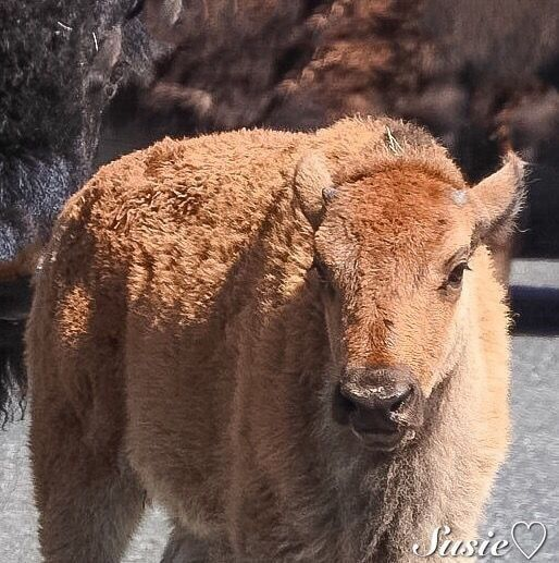 Wooly Bully by Susie ❤            Susie ❤: Photos                                 #animals #photography
