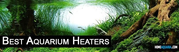 6 Best Aquarium Heaters For Your Fish Tank