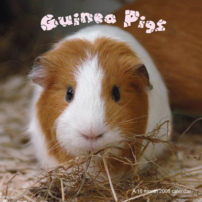70 best guinea pigs images on pinterest guinea pigs for Free guinea pig stuff