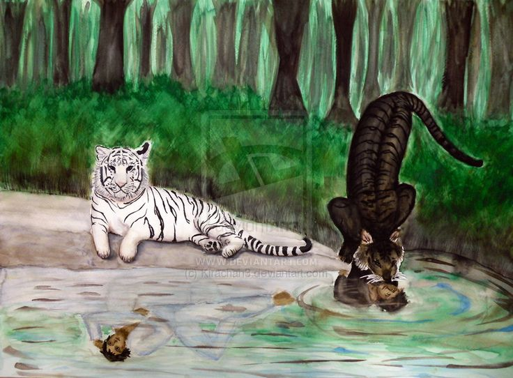 This is tha awesomest thing I have ever saw for the Tiger's Curse book series.