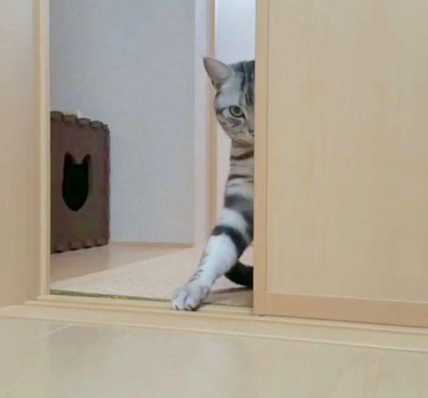 ドアの陰から ニャンコのおやつ催促がおもしろかわいいと話題 ね