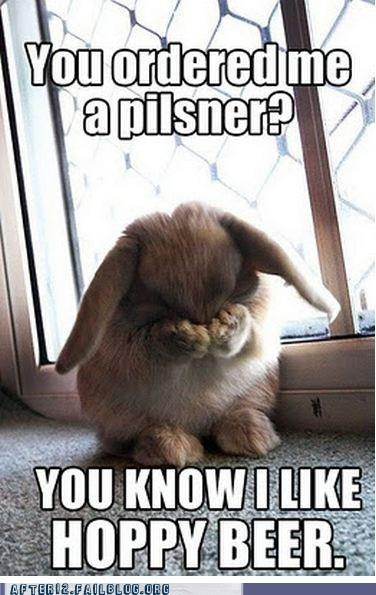dawwwwFoo Foo, Rabbit, Remember This, Peek A Boos, Baby Bunnies, Funny, Baby Animal, Foofoo, Bunnies Foo
