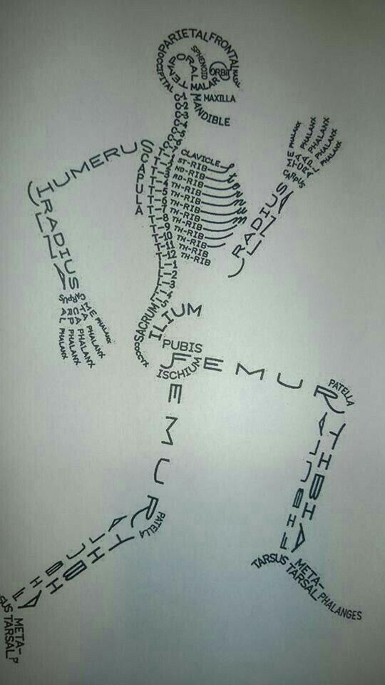 D13012018 | huesos anatomia | Pinterest | Huesos y Anatomía